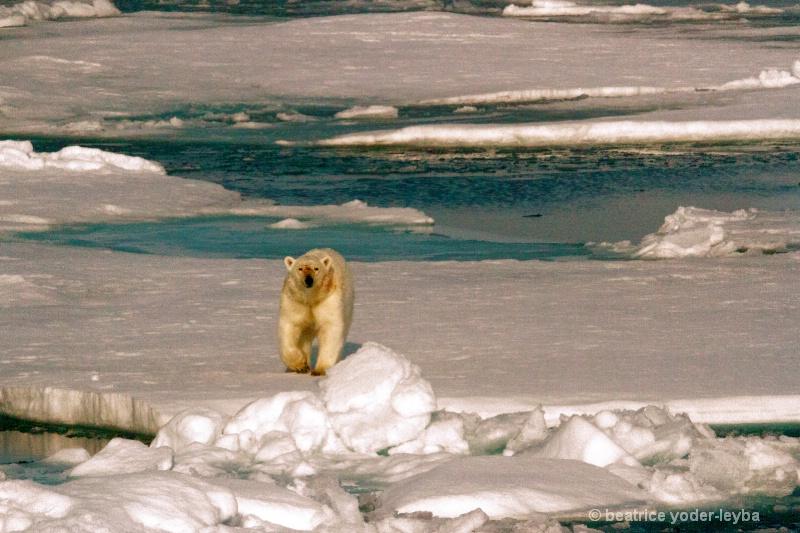 2011 arctic trip - 060