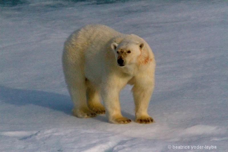 2011 arctic trip - 066