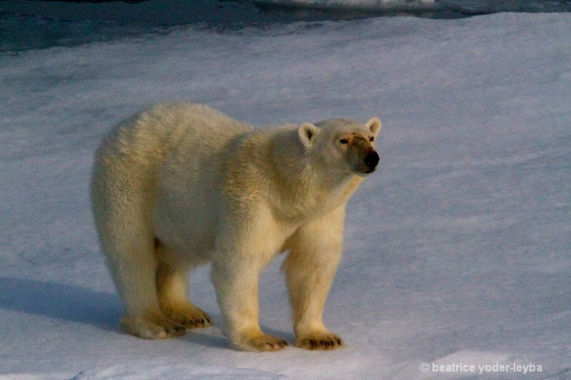 2011 arctic trip - 068