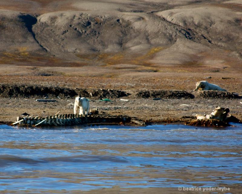 2011 arctic trip - 076