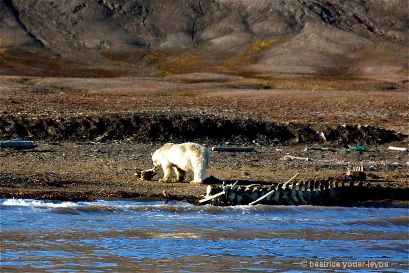 2011 arctic trip - 082