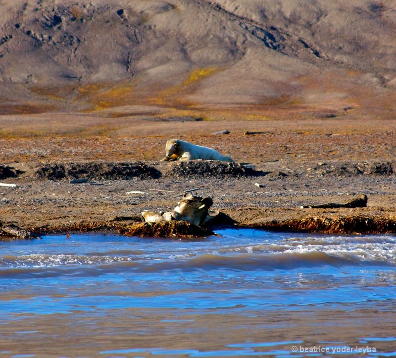 2011 arctic trip - 083