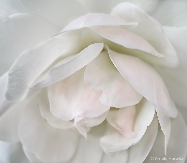 White with a Touch of Pink