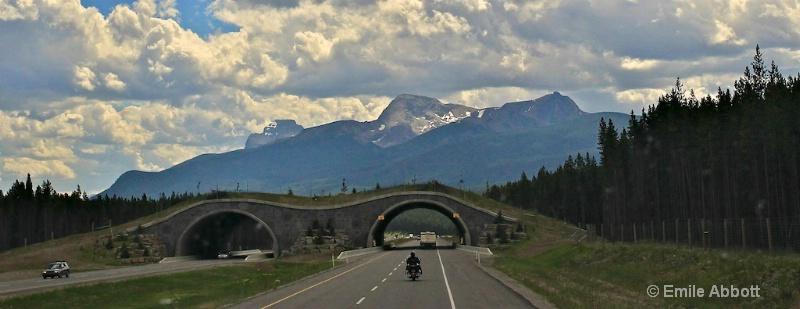 "Banff National Park ""Animal Overpass"""