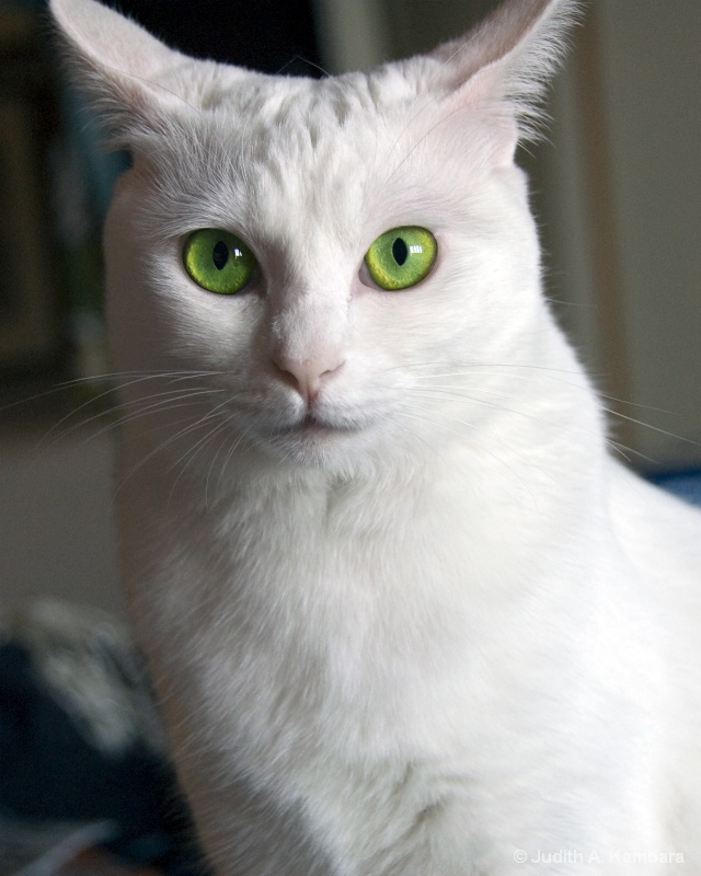 Yuki Green Eyes