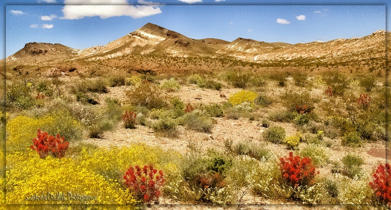 Springtime in Death Valley