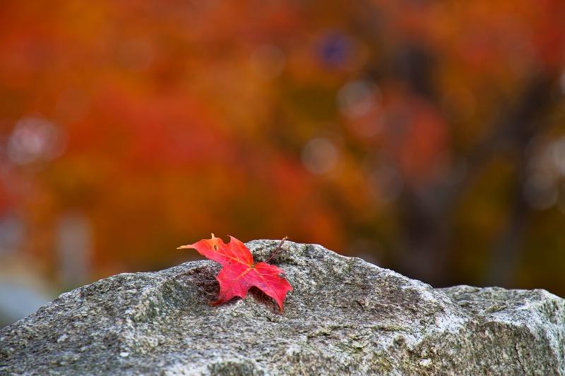 Reminiscing Autumn