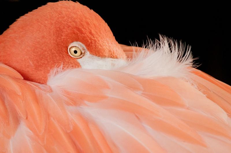 Flamingo & Feathers