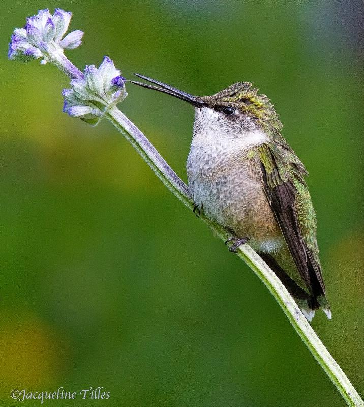 FLOWER WHISPERER