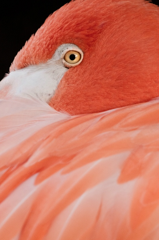 Eye of a Flamingo