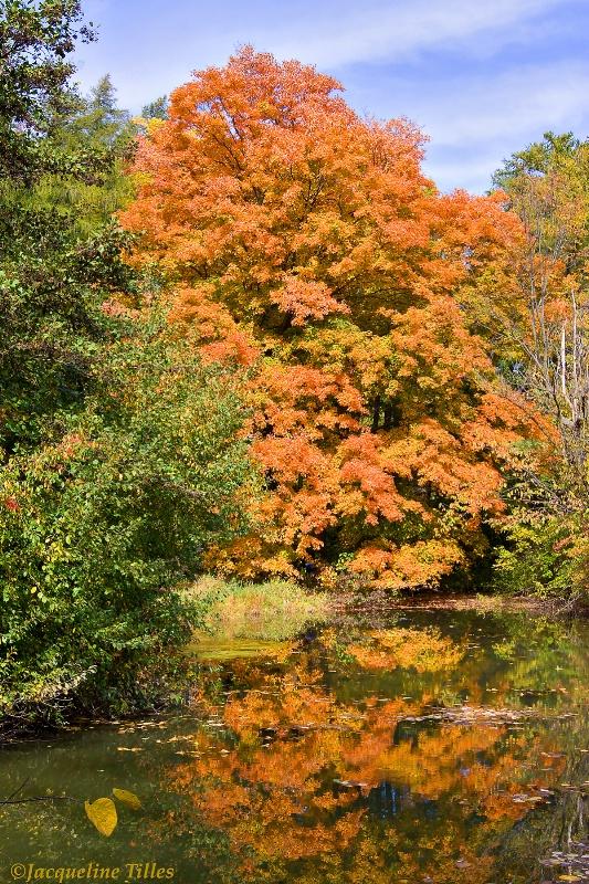 Maple Reflection on Lake Marmo