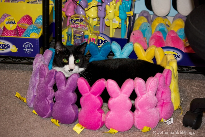 In the Bunny Circle
