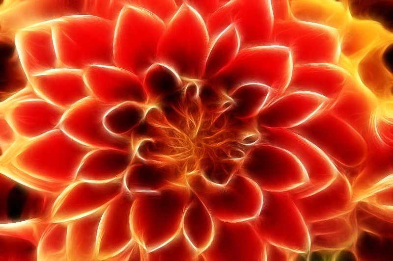 Orange & Yellow Flower in Seattle--Fractalius