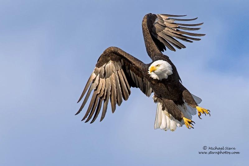 Eagle Jump 1