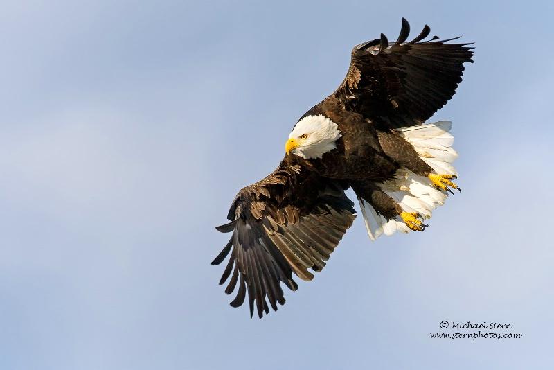 Eagle Jump 3