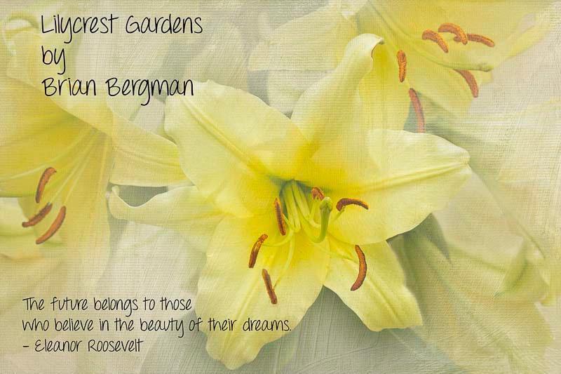 Lilycrest Gardens 2012