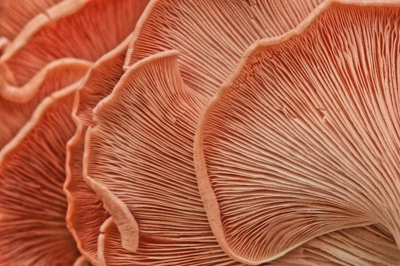 Marvelling the Mushroom: Tidal