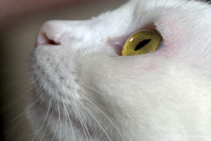 mesmerized kitty