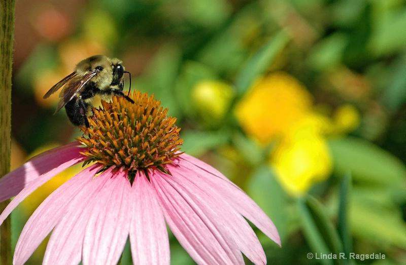 The Polinator