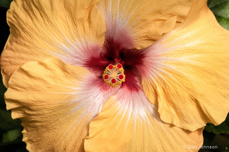 lg yellow hibiscus 3-0 f lr 2-2-13 j202