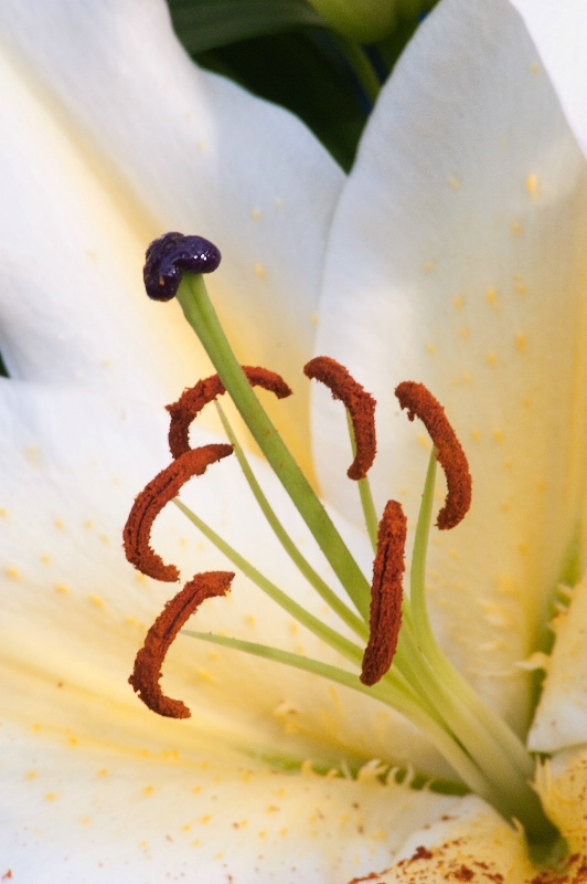Longwood Flower Close-Up