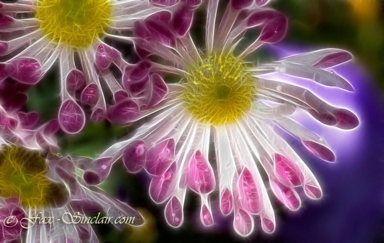Little Spoons Flower 3