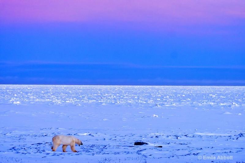 YAWN Waking up on the tundra.