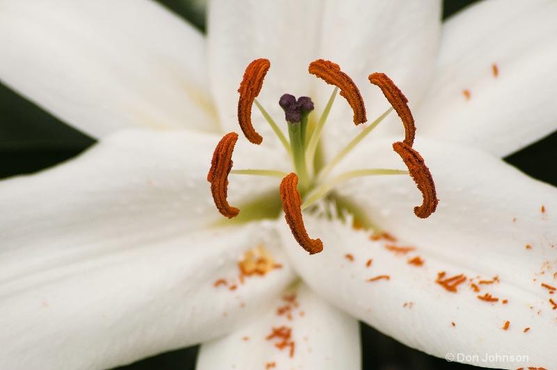 Longwood Gardens White Flower
