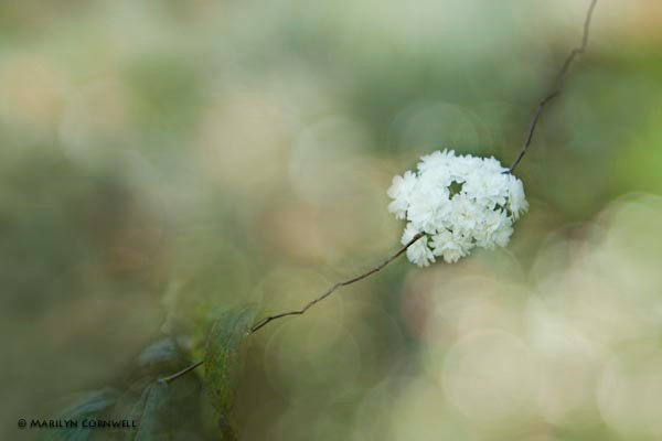 Floral Frills