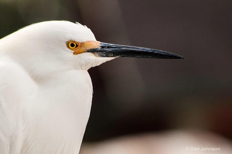 Egret in Florida