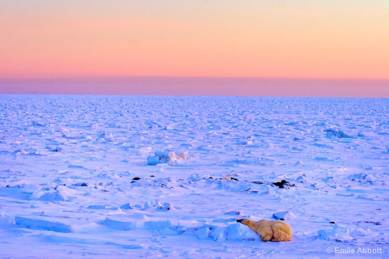 Very early morning on the tundra