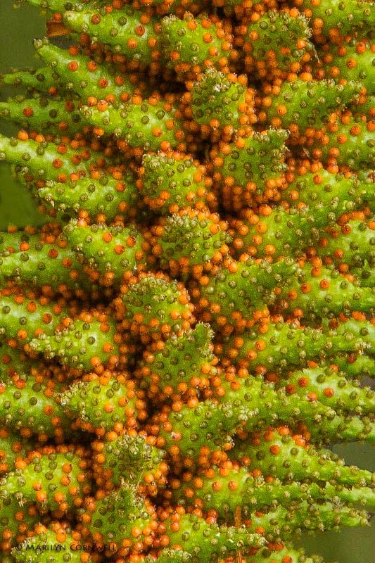 Nature's Details