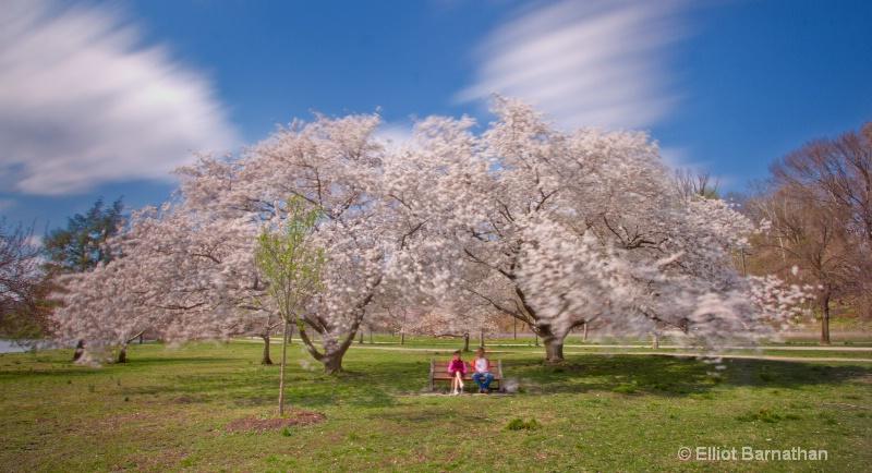 Spring in Philadelphia 21