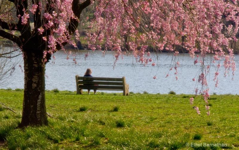 Spring in Philadelphia 14