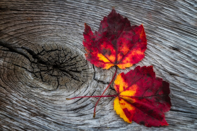 Autumn Duet