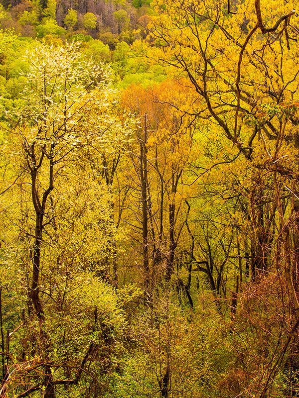 Spring Color in the Forest