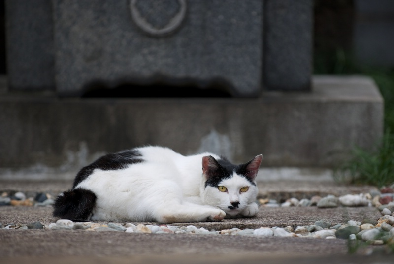 Beautiful Old Stray Cat