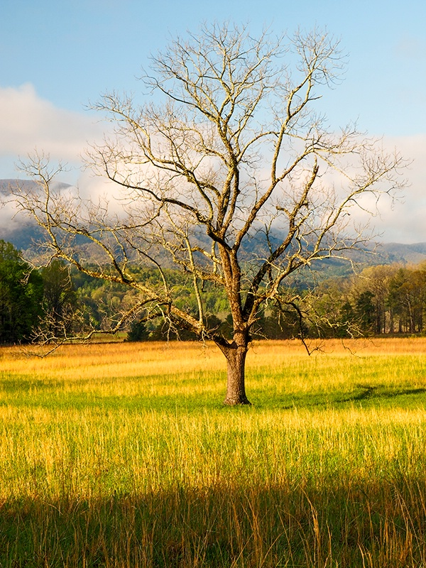 A Tree in the Meadow