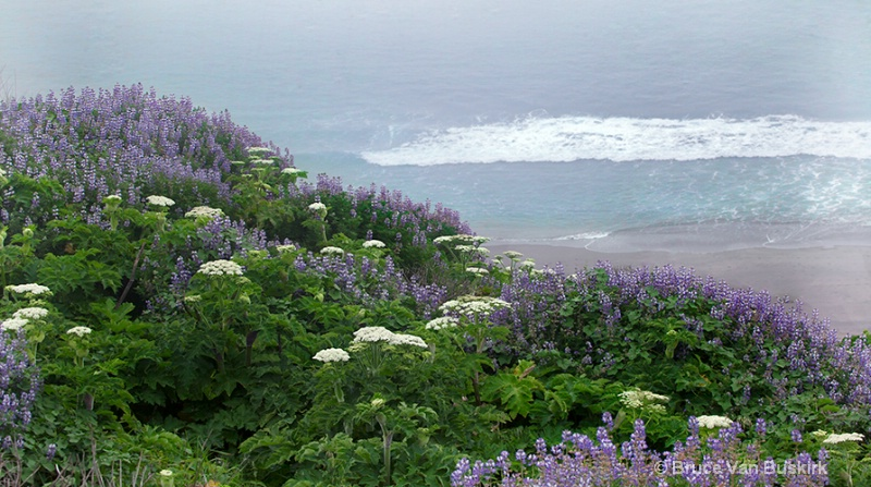 Flowers at the Ocean