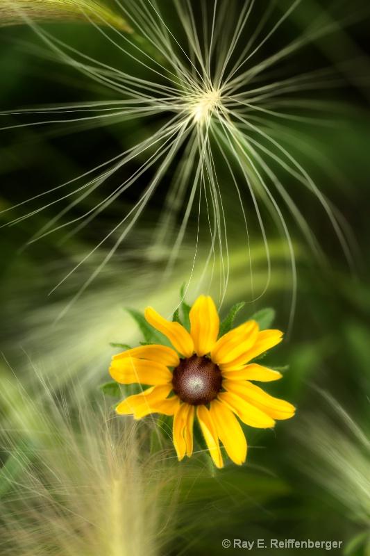 h0c7388 Flower13