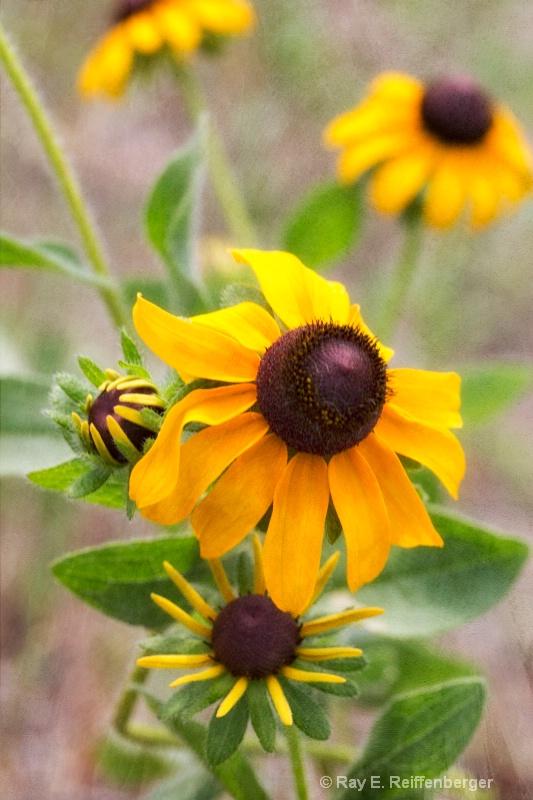h0c8299 Flower 13