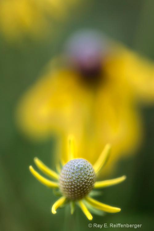 h0c8792c Flower 13