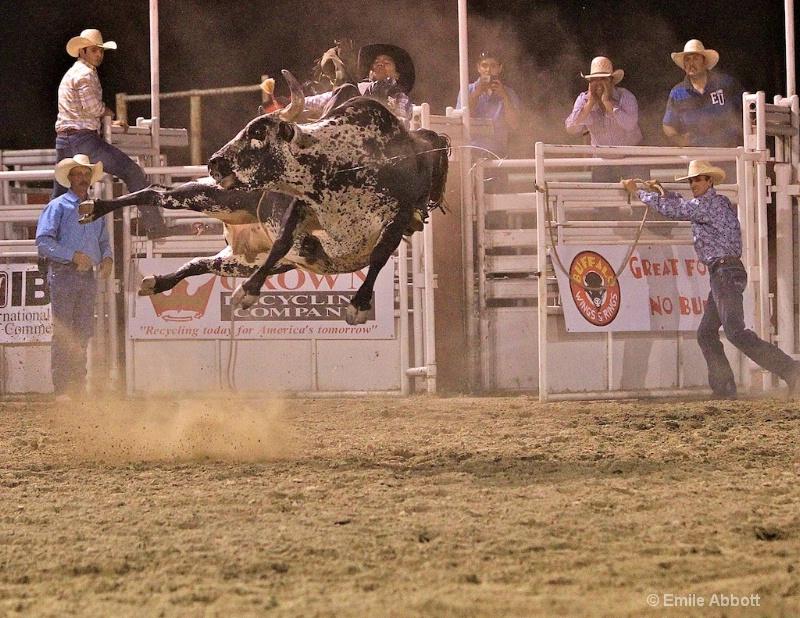 Bull flying sideways