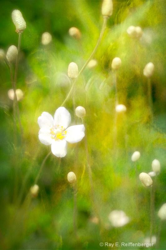h0c6253t Flower 13