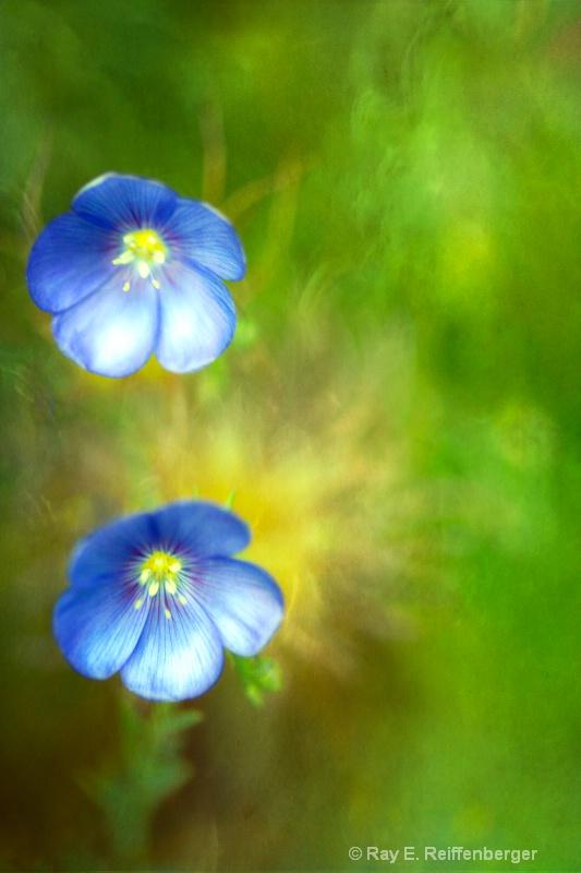 h0c6277t Flower 13