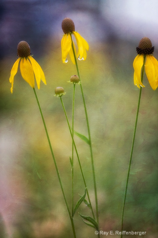 h0c9130t Flower13