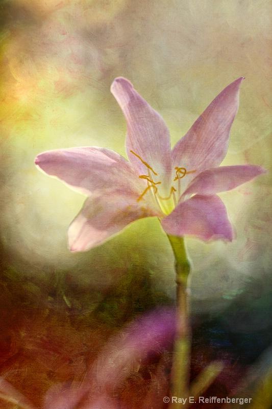 h0c9198 Flower13