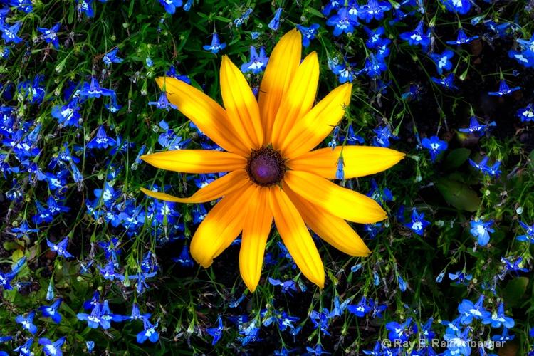 h0c0432c Flower13
