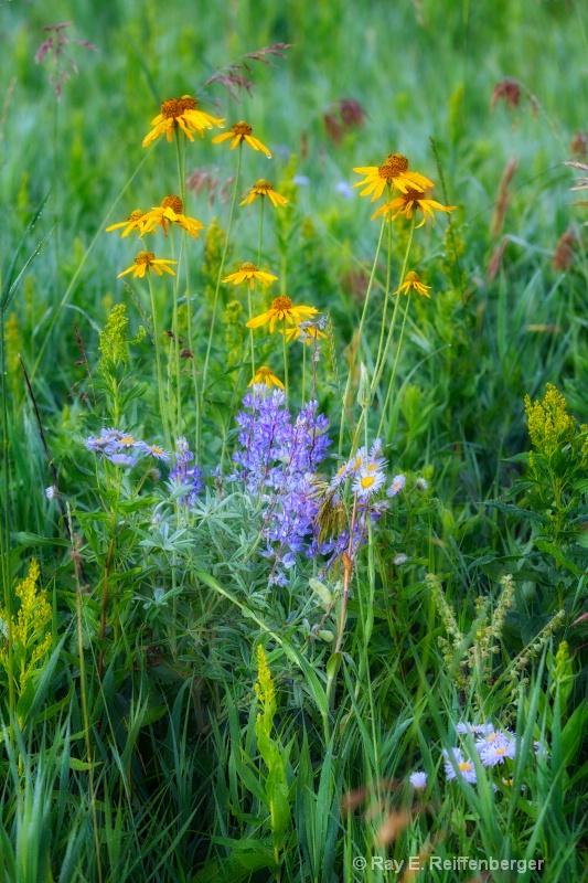 h0c0310 Flower13