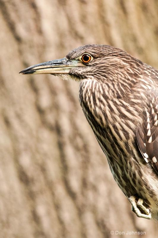 Wild Bird at National Zoo
